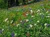 lush flowers in meadow near Crooked Creek