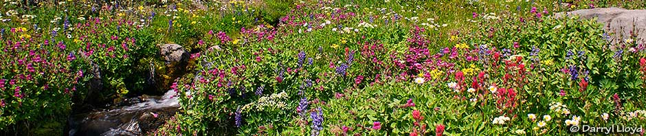 flowers of Bird Creek Meadows
