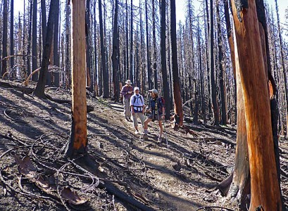 1. Stagman RidgeTrail in severely burned section. low-res